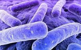 Baktériumok a közösségi WC-ben
